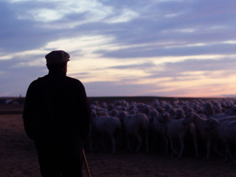 The Shepherd thumbnail